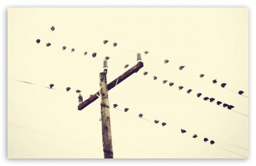 Download Birds Sitting On Power Lines UltraHD Wallpaper