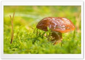 Mushroom, Green Moss Macro
