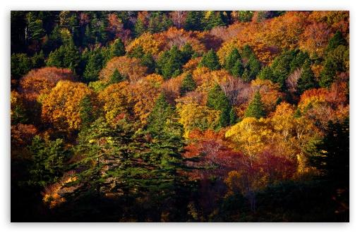 Download Hachimantai Forest UltraHD Wallpaper