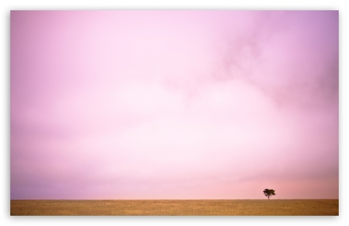 Download Pink Sky And Lone Tree UltraHD Wallpaper