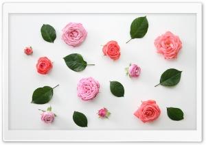 Pink Roses Flowers Design