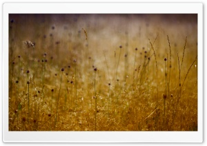 Long Grass, Summer