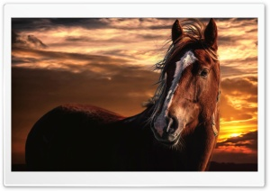 Brown Horse with White Stripe...