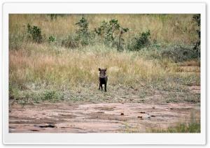 Lonely Warthog