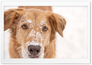 Dog With Snow on Head