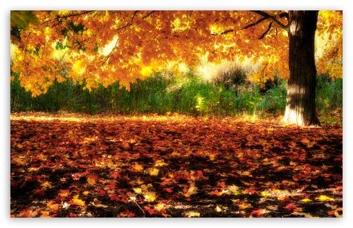 Download Golden Tree UltraHD Wallpaper