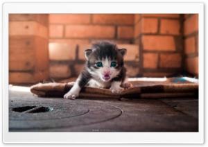 Cute Angry Kitty
