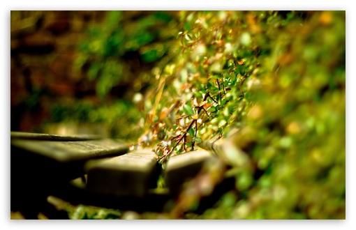 Download Bench   Green Plants UltraHD Wallpaper