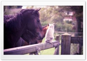 Horse Cat Friendship