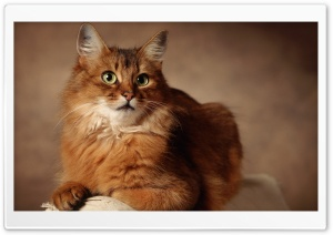 Red Cat Sitting On Armchair