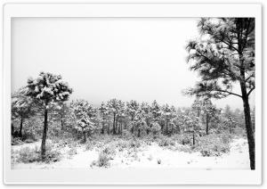Winter Between Murcia And...