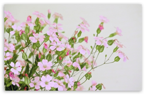 Download Cute Pink Flowers UltraHD Wallpaper