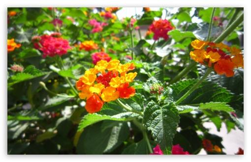 Download Flower Beautiful-Ali Malekpour UltraHD Wallpaper