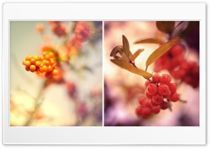 Red Berries Twigs