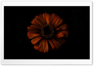 Dark Shadow Flower