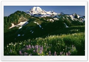 Field Of Wildflowers Mount...