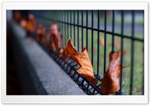 Leaves Caught In The Fence