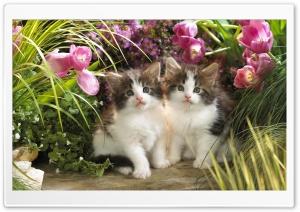 Kitten Cat In Backyard Scene