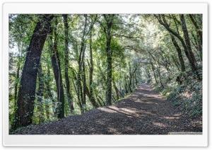 Path Between Trees Santa Pau,...