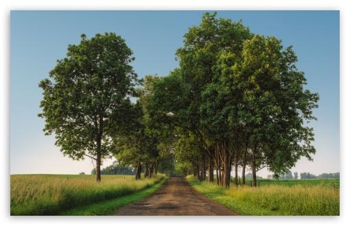Download Rural Road, Green Trees, Landscape UltraHD Wallpaper