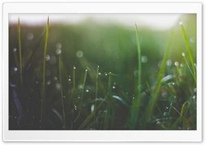 Wet Grass Threads