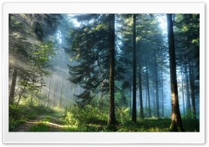 The Thick Forest