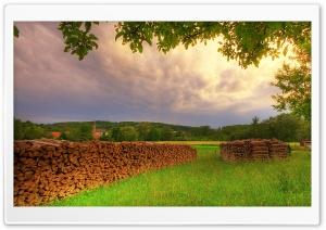 Meadow, Summer