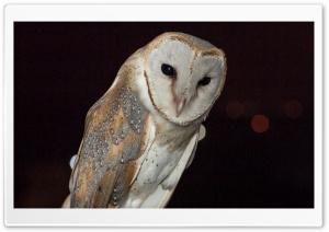 Barn Owl Night Time