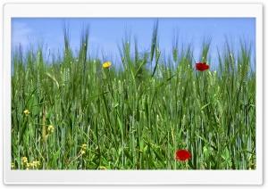 Green Field Spring 1