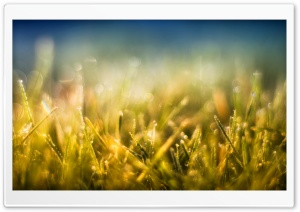 Gold Grass and Blue Sky