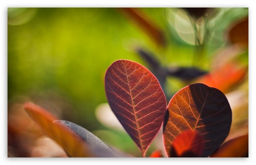 Download Reddish Leaves Close-up UltraHD Wallpaper