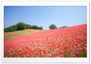 Field Of Wildflowers