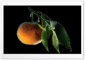Tangerine Fruit Underwater