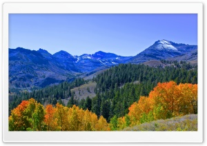 Fall Colors In The Sierra