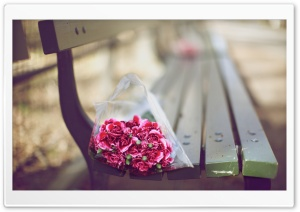 Carnations Bouquet On A Bench