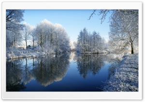 Frozen Trees Reflected In Water