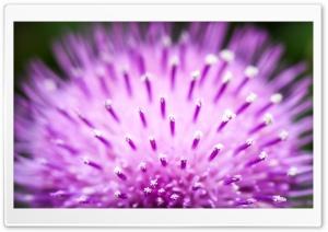 Fluffy Flower Macro
