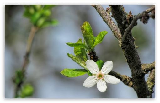 Download Blossom Flower Macro UltraHD Wallpaper