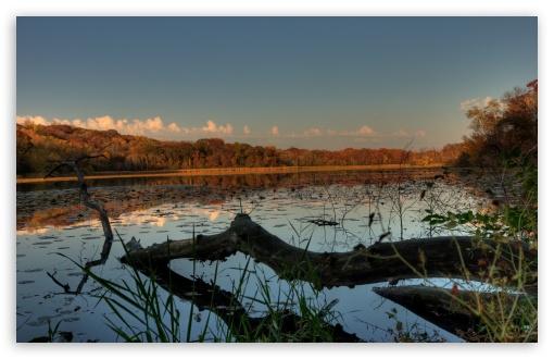 Download Fallen - Jensen Lake, Lebanon Hills Park,... UltraHD Wallpaper