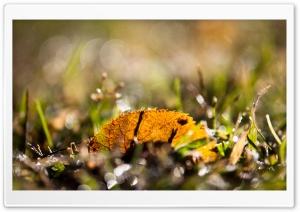 Fallen Leaf, Bokeh