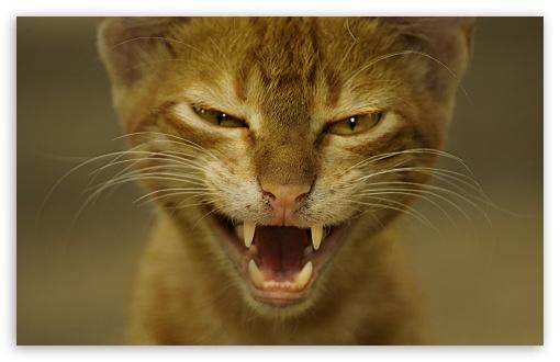 Download Cat Wild UltraHD Wallpaper
