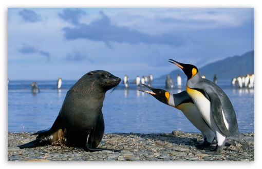 Download Two King Penguins And A Seal, Antarctica UltraHD Wallpaper