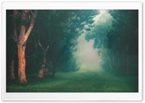 Rainforest Fog