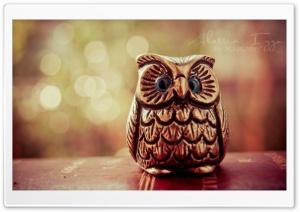 Little Lucky Owl