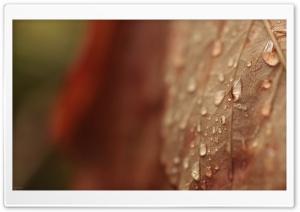 Brown Drops