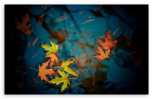 Download Fallen Leaves UltraHD Wallpaper