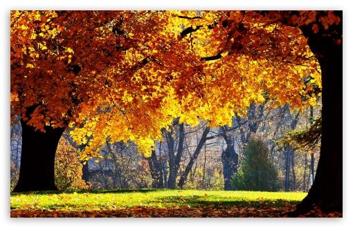Download Beautiful Fall UltraHD Wallpaper