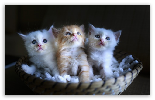 Download Three Adorable Kittens in a Small Basket UltraHD Wallpaper