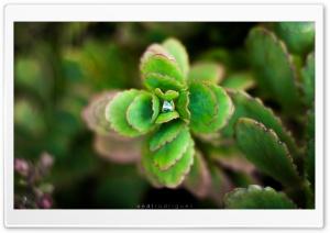 Enchanting Green Nature