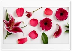 Stargazer lily, Peruvian...
